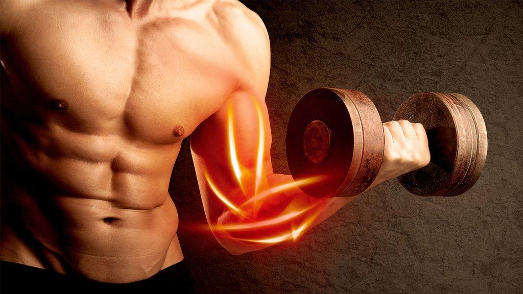 สร้างกล้ามเนื้อได้มากขึ้น